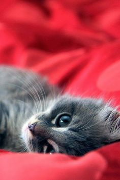 See more Adorable kitten lying on bed