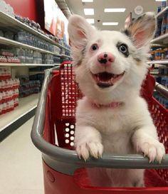 Catiora é surpreendida durante ida ao supermercado – sua reação está se tornando viral