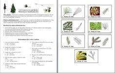 Teaching Classification and Taxonomy = FUN!!