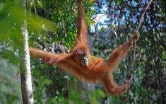 тропические животные: 14 тыс изображений найдено в Яндекс.Картинках
