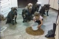 Not only are the dogs all eating together, fed by a small child, but they eat from one pile.