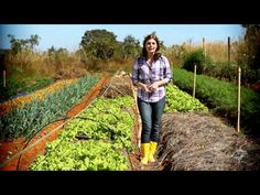 Agricultura Orgânica - Momento Ambiental - YouTube