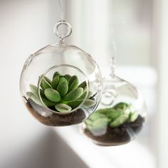 6 for $12 !! Really cute gifts! If you prefer to go with something even easier, you can use our artificial succulent place card holders or our cactus candles. Hang or place 4 in n glass terrariums around the home or outside in the garden. 6 terrariums per package.