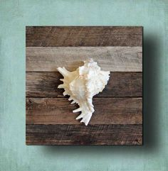 Beach Decor seashell on Driftwood for Coastal by BeachArtDesigns, $28.00