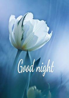 Sweet dreams my friends. Lovely Good Night, Good Night Flowers, Good Night Love Images, Good Night Prayer, Good Night Messages, Good Night Sweet Dreams, Good Night Moon, Good Morning Love, Good Night Image