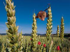 Balanceren tussen de aren – Foto van de dag - National Geographic Nederland/België