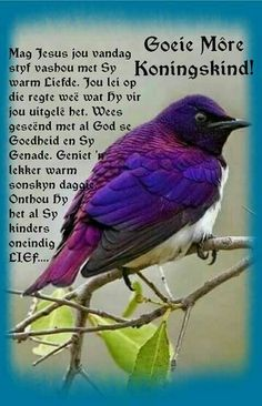 Good Morning Wishes, Day Wishes, Good Morning Quotes, Afrikaanse Quotes, Goeie Nag, Goeie More, Special Quotes, Prayers, Faith