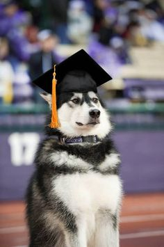 the fact that the University of Washington's mascot is a dog makes me so happy in so many different ways because then you get photos like this at graduation