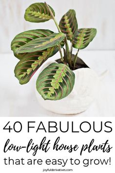 40 Best Indoor Plants that Don't Need Sunlight - Joyful Derivatives Find the perfect low-light house plant for your home in this list of 40 plants that don't need sunlight to thrive. Whether you're looking fo Best Indoor Plants, Outdoor Plants, Best Desk Plants, Indoor Hanging Plants, Indoor House Plants, Garden Plants, Indoor Shade Plants, Flowering House Plants, Patio Plants