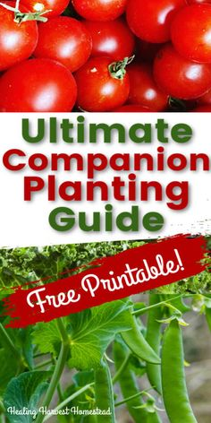 Complete Companion Planting Guide: Tips for Plant Friends and Foes in the Garden so You Can Decide What to Plant and Where — Home Healing Harvest Homestead