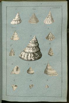 Конхиологическая коллекция — Просмотр — Mировая цифровая библиотека