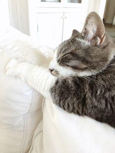 Nap on the sofa