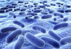 Protecting Probiotic Bateria Supernatant - In a 2014 Bacteriocin study, Natren's NAS super strain was found to have a proven ability to secrete a diverse array of bacteriocins. Bacteriocins are a group of peptides or proteins that have natural antimicrobial activity, thereby eliciting additional probiotic benefits.