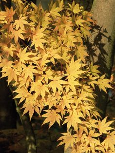 8 Flowering Trees For Fall Color --> http://www.hgtvgardens.com/photos/trees-photos/flowering-trees-for-fall-color?soc=pinterest