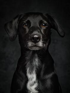 Dog Liz focusing