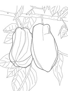 Star Fruit On Tree Coloring Page From Category Select 28306 Printable Crafts Of Cartoons Nature Animals Bible And Many More