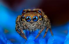 Colorful Macro Photos of Spiders by Jimmy Kong | Inspiration Grid | Design Inspiration