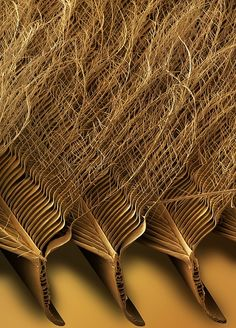 Tawny Owl Feather Detail, Sem (Print) by Power And Syred