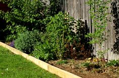 Learn how to install lawn edging pavers to make mowing strips. Edging keeps grass out of beds, while the strip makes mowing easier. Timber Garden Edging, Landscape Timber Edging, Wood Edging, Landscape Timbers, Lawn Edging, Landscape Design, Brick Edging, Garden In The Woods, Lawn And Garden