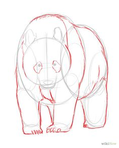how to draw realistic animals step by step for kids - Google Search