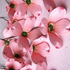 "36 Likes, 3 Comments - Anemone Paper Flowers (@apaperflowers) on Instagram: ""Is it spring yet? #snowkane #snowglobe"""