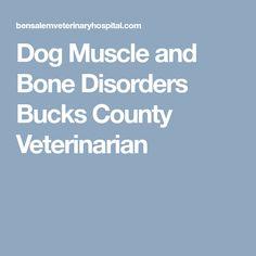 Dog Muscle and Bone Disorders Bucks County Veterinarian