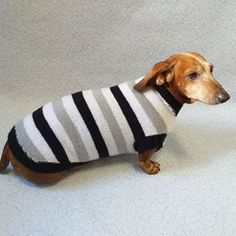 Knitted clothes dog dachshund (@dachshundknit) • Фото и видео в Instagram Dachshund Clothes, Small Dogs, Handmade, Hand Made, Little Dogs, Small Breed Dogs, Arm Work
