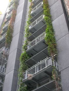 climbing plants on building - Google Search