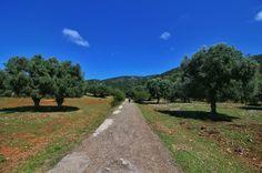 silence  #nature#naturelovers#outdoors#outdoorlife#photooftheday#picoftheday#tbt#tflers#trekking#tree#trees#amazing#iger#vsco#vscocam#vscocamphotos#sun#skyporn#sky#street#walk#enjoymaremma#parcodellamaremma#squaready#niceday by lamariniss