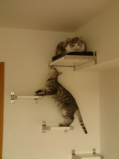 kitty cat shelves or wall stairs. This would be great on the back of the house for our outside cats.  We could even build a cat house at the top level for them to sleep in...