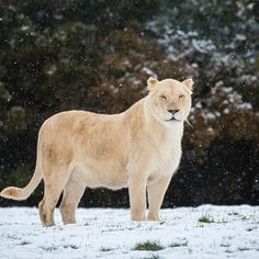 Join us on weekends - our Wild Winter Safari event continues until 4th February 4th!