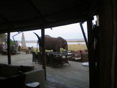 Another Great Safari