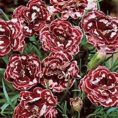 would love to have some new flowers these are really pretty