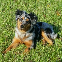 My best friend Sadie! http://ift.tt/2e1ka97