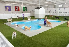 JFK Is Getting a Ridiculous Luxury Animal Terminal