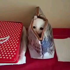 This kitty found a new hiding place 😻 - Katzen - Tiere Cute Baby Cats, Cute Cats And Kittens, Cute Little Animals, Cute Funny Animals, Kittens Cutest, I Love Cats, Cutest Dogs, Funny Animal Memes, Funny Cat Videos