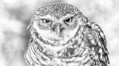 Wildlife Conservation, Endangered Species, Natural World, Bald Eagle, Habitats, Creatures, Preserve, Pets, Nature