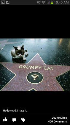 Go grumpy cat