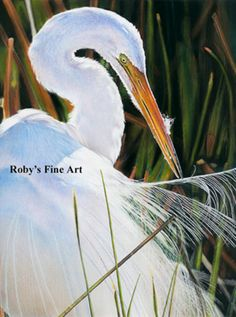 """Great Egret in Sacramento Wildlife Refuge Art Print """"Sun Bath"""" by Roby Baer PSA   eBay Gorgeouos bird and background.  Like it but need larger size"""