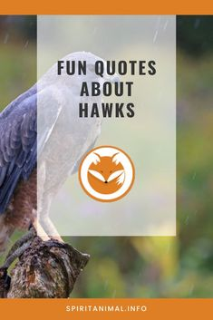 For the hawk lover. Check out these inspirational quotes about hawks. Click through now. #spiritanimals #animaltotems Hawk Spirit Animal, Find Your Spirit Animal, Animal Totems, Hawks, Natural World, Best Quotes, Inspirational Quotes, Check, Nature