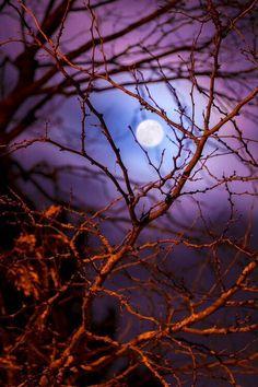 moon through red bare tree