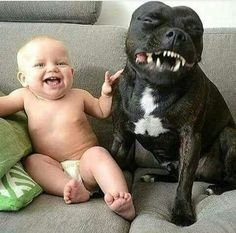 This is adorable looks like the dog is dying laughing lol!!