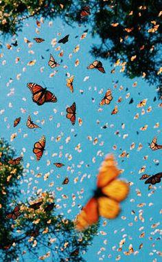 butterfly wallpaper Monarch butterflies swarming flying around in the beautiful blue sky. Yellow Aesthetic Pastel, Aesthetic Pastel Wallpaper, Aesthetic Backgrounds, Aesthetic Wallpapers, Bedroom Wall Collage, Photo Wall Collage, Collage Walls, Art Walls, Look Wallpaper