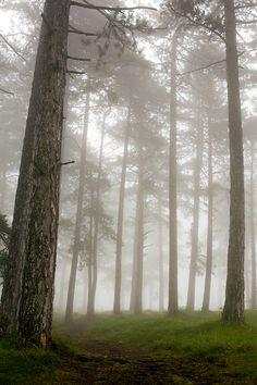 Mountain Tara, #Serbia, #Forest