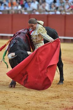 Woman Bullfighter With Bull In A Bullfight Stock Photo 34282232 Clay Tools, Alpha Female, Cattle, Messenger Bag, Spain, Satchel, Stock Photos, Merida, Women