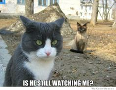 is-he-still-watching-me