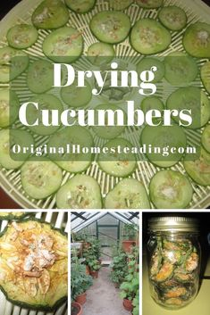 Cucumbers are a wonderful addition to your summer garden or greenhouse. Learn how to dry your extra cukes for year round snacking. Super Healthy and Super Delicious!