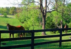 Horses and green pastures
