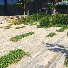 Endicott filleti interspersed with some Dichondra repens at a recently completed E-GA Hampton job, in conjunction with @bmc_landscapes, @mattgibsonad and Valeo Construction #ega #concretehouse