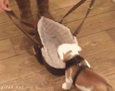 Forma correcta de sacar a pasear al perritu